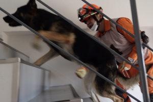 Disaster Rescue Dog Training (Search Dog Fukushima);